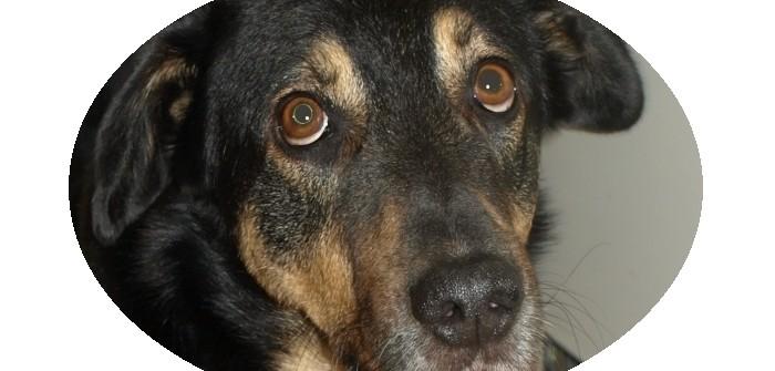 Alarmanlage Hund